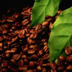Марки кави і деякі його сорти