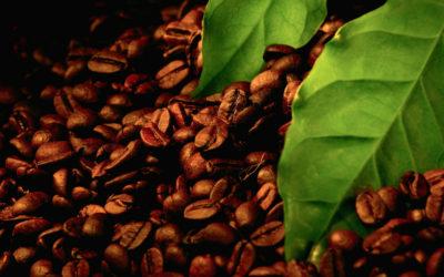 Марки кави