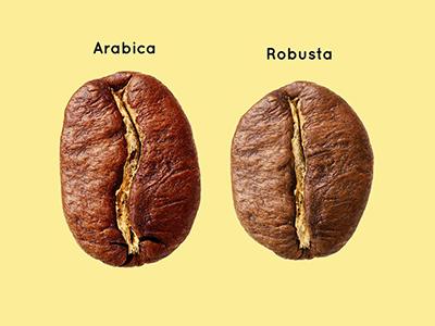 Наука кави: Що відомо про самий суперечливий напій