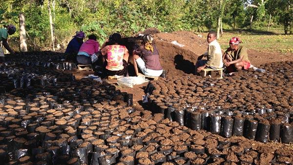 Кава з Гаїті - дуже якісна, але рідкісна гостя на світовому ринку