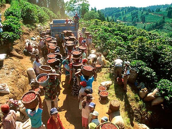 Кава з Венесуели: щедрий дар природи